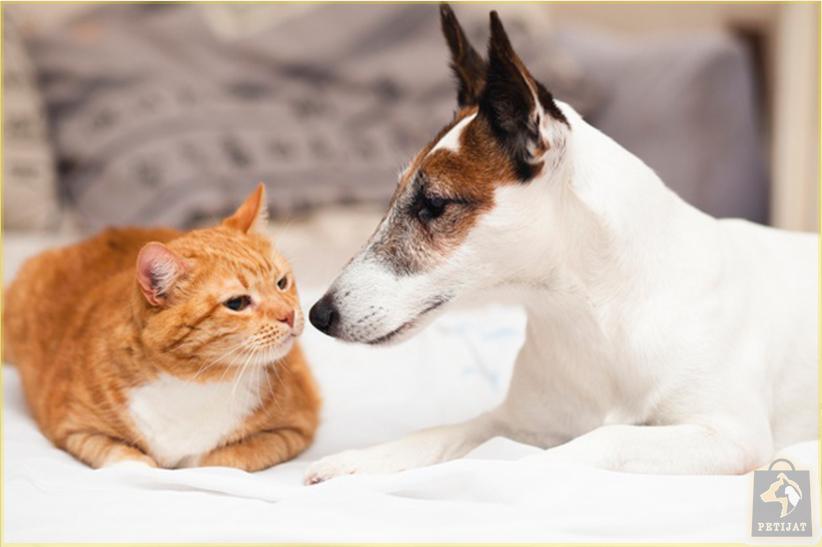 7 نکته مهم برای نگهداری حیوان خانگی