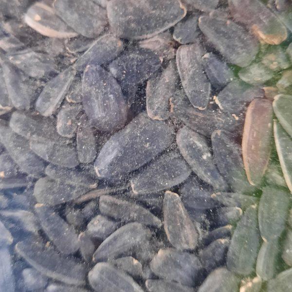 تخمه آفتابگردان سیاه