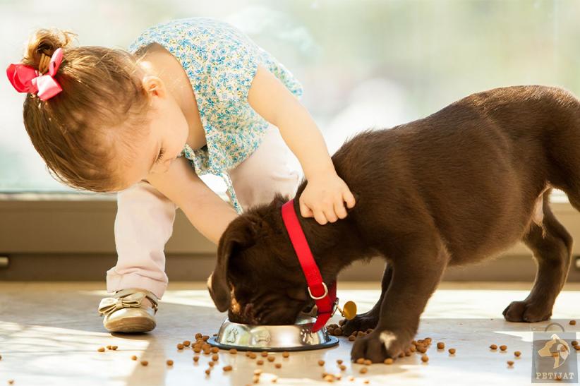 مزایای نگهداری از سگ ها